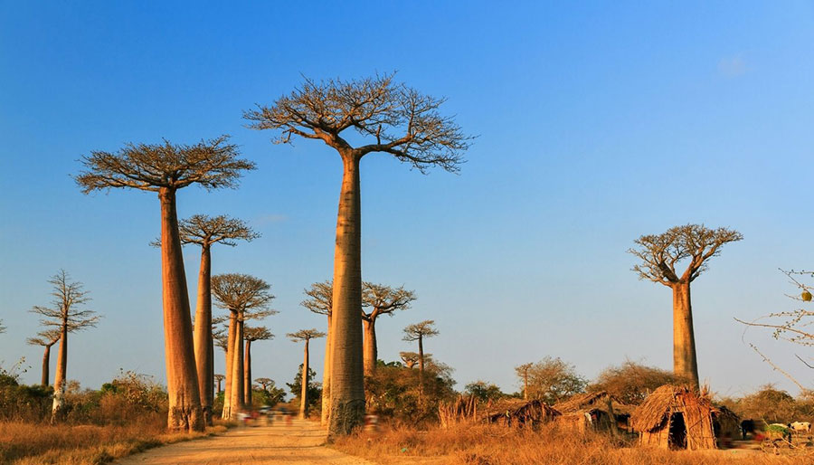 best countries to visit in Africa: Madagascar