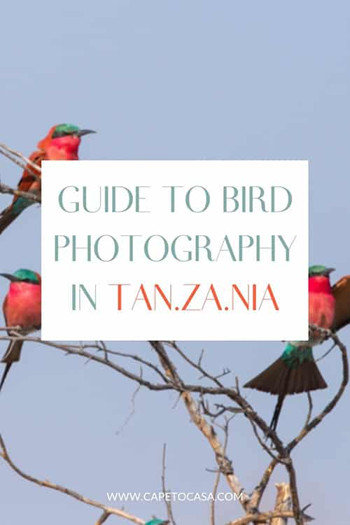 bird-photography-in-tanzania